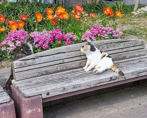 駅前まちかど広場では猫カップルが花見に来ることも!
