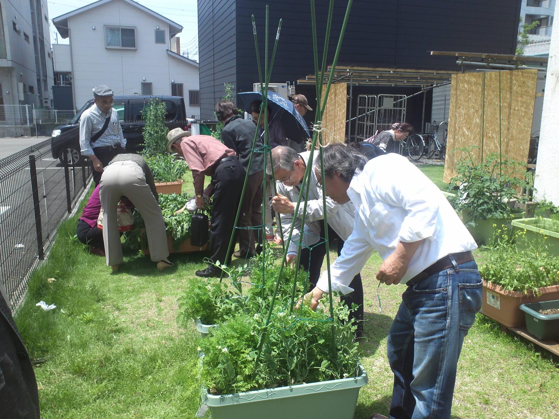 開園式終了後に、高齢者大学の人達が収穫体験。皆さん、これから何を植えようか思いを馳せてらっしゃいます。