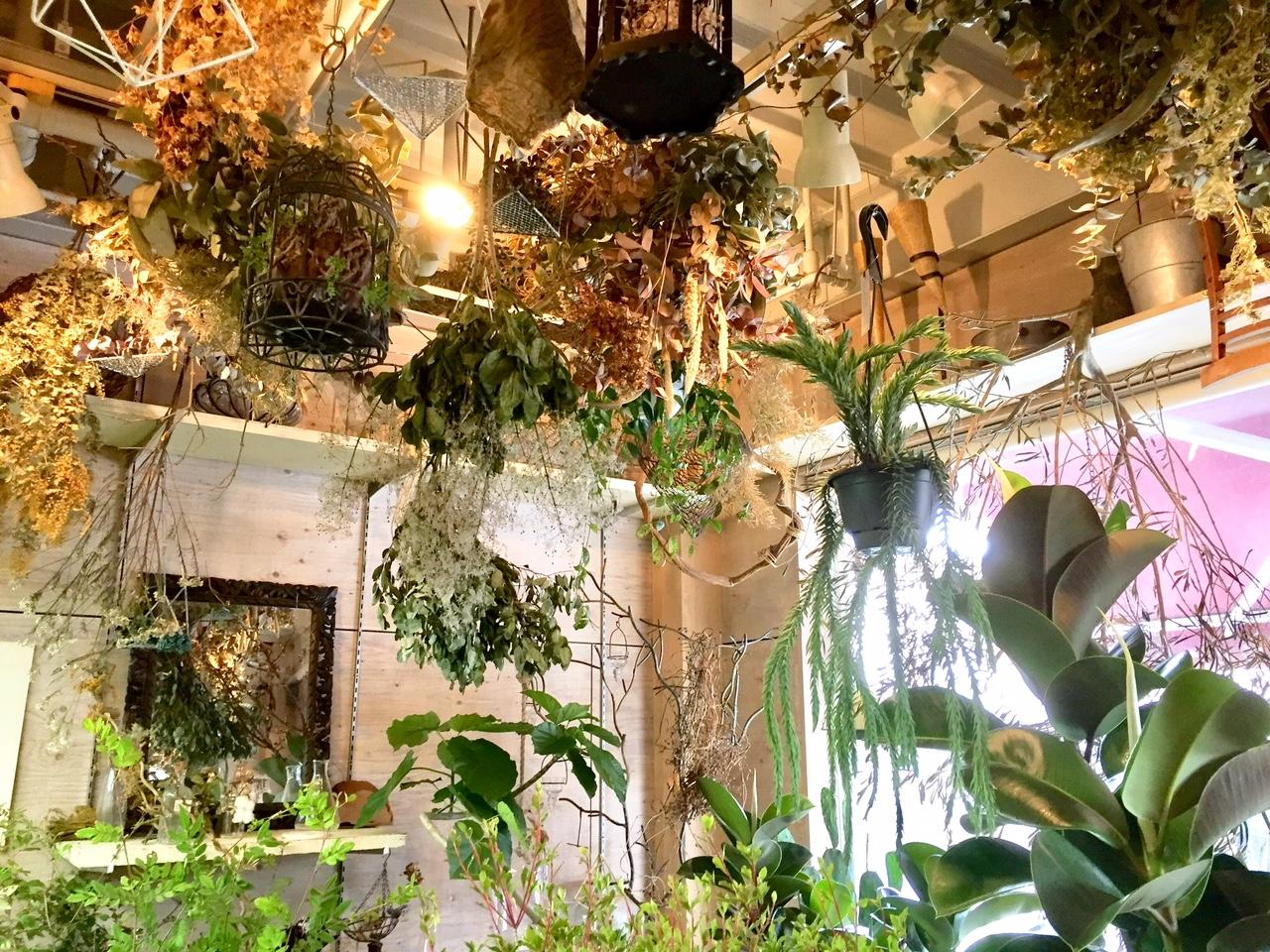 様々な種類のドライフラワーと観葉植物